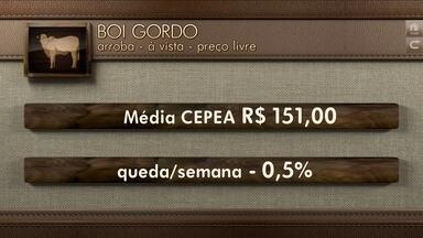 Globo Rural: cotações - Confira a cotação do boi gordo, do café conilon e do café arábica