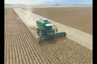 Em Paragominas, agricultores comemoram o crescimento da produção de soja - O clima e o solo da região são os fatores que contribuem para a expansão da atividade agrícola.