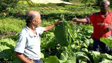 Horta urbana no bairro Sotelândia, em Cariacica, vende alimentos frescos para população - Os alimentos são colhidos na hora. A horta funciona todos os dias.
