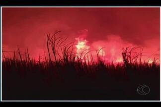 Incêndio florestal atinge canavial de cerca de 80 hectares em Tupaciguara - Segundo Bombeiros, fogo só foi controlado às 23h dessa sexta-feira (19).Incêndio começou por causa de uma queimada em uma fazenda vizinha.