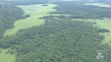 Edital para a concessão de mais de 130 mil hectares de florestas será lançado no Amapá - Até o fim de setembro, o governo do Amapá irá lançar um novo edital para concessão de, pelo menos, 130 mil hectares de floresta no estado. O edital prevê a exploração de áreas do município de Serra do Navio. Com essas concessões, o governo espera arrecadar pelo menos R$ 8 milhões por ano.