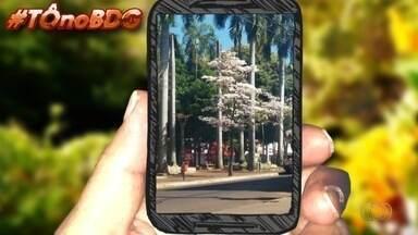 Telespectadores enviam fotos para o Bom Dia Goiás - Entre as imagens há o registro de ipês em Itumbiara.