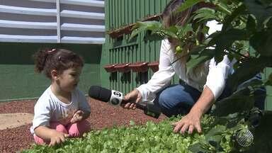 Crianças aprendem a cultivar alimentos em projeto de educação ambiental - As iniciativas formam melhores cidadãos; conheça.