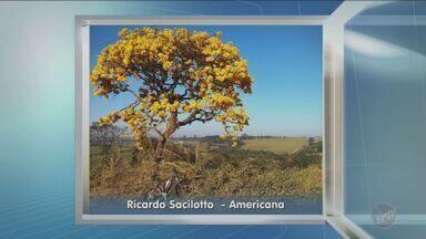 Veja imagens enviadas por telespectadores no quadro Na Janela - Veja imagens enviadas por telespectadores da região no quadro Na Janela.