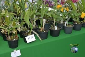 Exposição de Orquídeas e Plantas Ornamentais tem atrações até domingo, em Poá - A Expoá começou hoje e acontece na Praça de Eventos, centro de Poá.