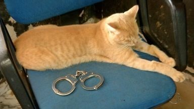 Agentes penitenciárias criam trabalho para controlar população de gatos em Campo Grande - Duas agentes penitenciárias de Campo Grande criaram um trabalho para controlar a população de gatos que vivem ao redor do Instituto Penal.