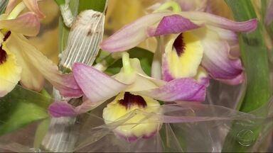 Feira de flores e plantas tem motivação solidária em Dourados, MS - A segunda Expoflor Verde reúne mais de 140 tipos de plantas. O que for arrecadado será doado para uma entidade assistencial.
