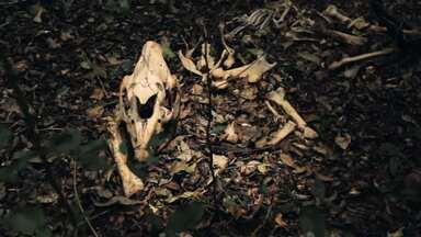 Reserva das Perobas guarda mistérios no noroeste do Paraná (parte 2) - Área é considerada ilha de preservação na região noroeste do Paraná
