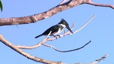 Natureza na Fazenda Anacã - No Mato Grosso, área preservada é refúgio de várias espécies.