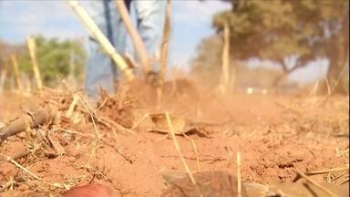 Quase 44 mil produtores rurais vão receber a primeira parcela do Garantia Safra - A seca tem castigado bastante as lavouras esse ano. Uma saída para os agricultores familiares é o Garantia Safra - uma espécie de seguro com o qual eles podem contar. No norte de Minas Gerais, produtores já estão recebendo o benefício.