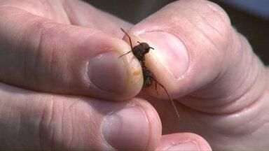 Pesquisador de Londrina testa nova forma de acabar com as formigas cortadeiras - Ele não usa produtos químicos.