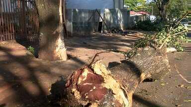 Ladrões em carro roubado batem em árvore - Os dois ficaram gravemente ferido