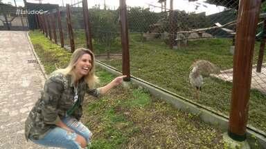 Daiane Fardin nos leva para conhecer um criadouro animal particular - O local não é aberto ao público, pois o objetivo é a reprodução de espécies para a reintrodução na natureza