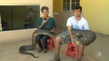 Estudante mantém cobra de cinco metros e mais de 80 animais dentro de casas em Juazeiro - Conheça a história de um aficionado que resgata e cuida dos animais, muitos em extinção.