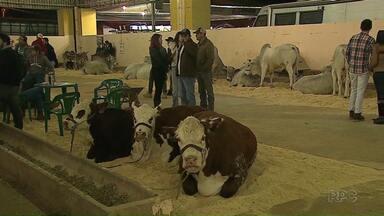 Efapi em Ponta Grossa começa movimentada - Veja como foi a primeira noite da Feira Agropecuária e Industrial