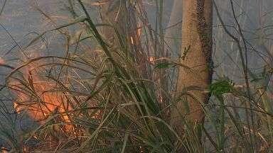 Bombeiros alertam para cuidados para evitar queimadas - Bombeiros alertam para cuidados para evitar queimadas.