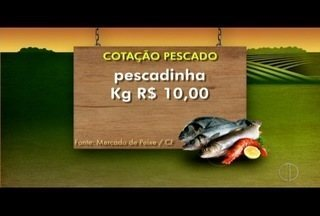 Confira a cotação dos pescados no mercado municipal de Cabo Frio, no RJ - Quilo do namorado grande sai por 23 kg.