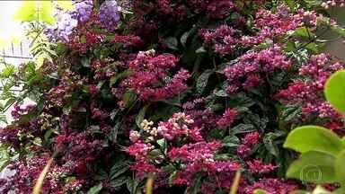Primavera oferece a beleza e o colorido das flores à metrópole - As chuvas típicas da nova estação, que começa nesta quinta-feira (22), proporcionam ótimas condições para o cultivo das plantas.