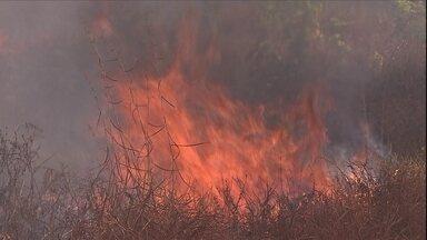 Fogo se espalha e provoca devastação na Amazônia - Brigadistas do IBAMA lutam contra incêndios que avançam sobre florestas, pastagens e plantações em Rondônia.