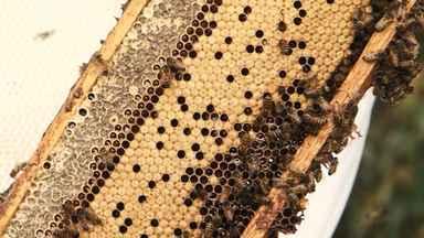 Estiagem no sudoeste do estado pode reduzir a produção de mel - A chuva da primavera ainda aflora a esperança dos apicultores.