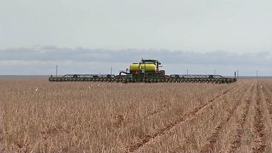 No Oeste de MT mais de 30% das lavouras foram plantadas - Na região Oeste choveu bem e os agricultores aproveitaram o solo úmido. Com isso, os trabalhos de semeadura foram intensificados.