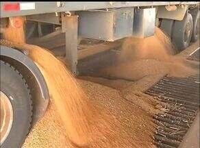 Conab divulga estimativa para a produção de grãos - Conab divulga estimativa para a produção de grãos