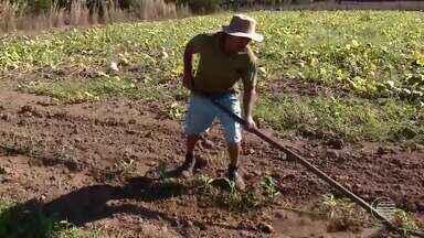Agricultores do Piauí estão sem receber seguro safra mesmo afetados pela seca - Agricultores do Piauí estão sem receber seguro safra mesmo afetados pela seca