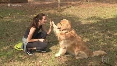 Cães obesos já são mais de 40% no Brasil - A obesidade é um problema de saúde também nos melhores amigos do homem. André Marques mostra como você pode identificar que o cachorro está acima do peso