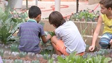 Alunos de escolas de Bauru cultivam legumes e verduras que vão para merenda - Uma parceria entre uma empresa privada e escolas públicas está incentivando hábitos de alimentação saudável entre estudantes em Bauru (SP). Para aprender a importância da boa alimentação, os alunos deixam de lado cadernos e canetas e colocam a mão na terra. Eles mesmos plantam em hortas os alimentos que serão usados na merenda.