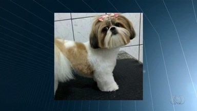 Cachorra é levada por criminosos durante roubo de carro em Goiânia - Família está desesperada em busca do animal de estimação.