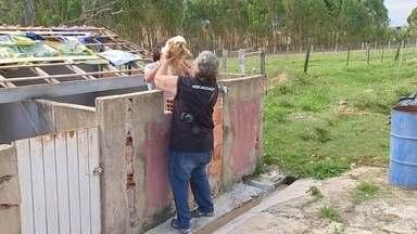 """Canil clandestino em Itapetininga era usado como 'loja de cães', diz polícia - Um canil clandestino fechado nesta segunda-feira (24) em Itapetininga (SP) pelas polícias Civil e Ambiental servia como uma """"loja de cães"""", afirmam as corporações. Segundo o delegado Marcos Tadeu Cardoso, a responsável pelo local reproduzia os cães de raça e depois os vendia. Mais de 40 animais, entre cães e cavalos, foram achados com sinais de maus-tratos."""