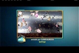 Telespectador de Ipatinga mostra bueiro com focos do aedes aegypti - Bueiro fica na Avenida Japão; prefeitura teria sido comunicada.
