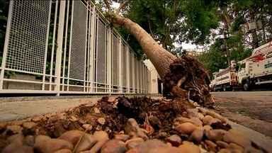 São Paulo perde 140 árvores por mês - É só chover forte, que as ocorrências de queda de árvores de multiplicam. A capital perde, em média, 140 árvores por mês. E não é só quando chove.