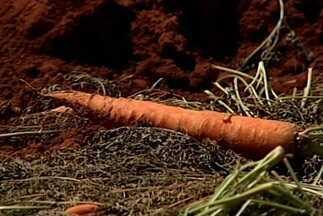 Oferta de cenoura faz preço do produto despencar em São Gotardo - Caixa de cenoura que custava R$ 20 agora é vendida a R$ 5. Produtores da região reclamam do período.