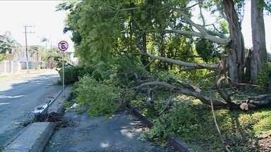 Sul de SC tem destelhamentos e quedas de árvores em temporal - Sul de SC tem destelhamentos e quedas de árvores em temporal