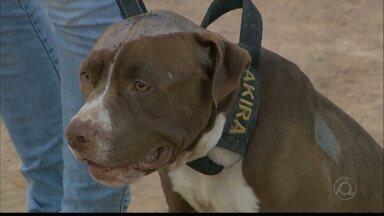 JPB2JP: Jovem é preso acusado de atirar em cachorro - A Polícia também identificou outros dois acusados de maus tratos a animal.