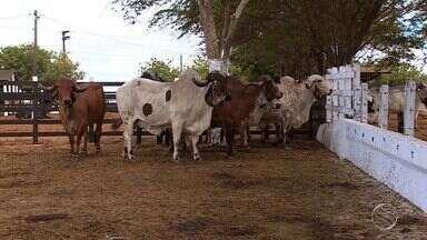 Criadores de gado devem ficar atentos a doença - Criadores de gado devem ficar atentos a doença.