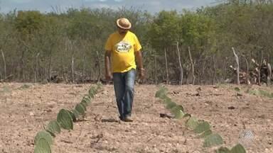 Agricultores aproveitam chuva para plantar no interior do estado: veja na Previsão - Saiba como fica o tempo no estado.