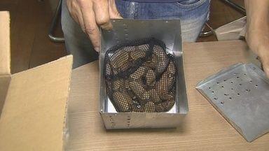 RO está na rota de tráfico de animais silvestres - Jiboias que estavam sendo levadas para São Paulo foram apreendidas.