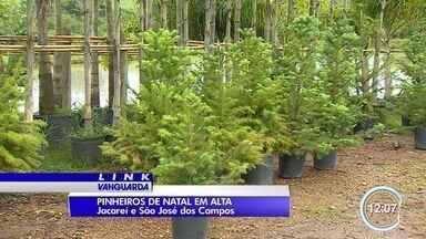 Decoração de Natal aquece o comércio de venda de pinheiros naturais - Árvores são a escolha de muitas pessoas para enfeitar casas e comércios