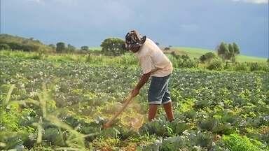 Redação Móvel está no Núcleo Rural de São José, em Planaltina - A zona rural de Planaltina é a maior região produtora de pimentão do DF.