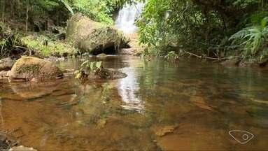 Produtores rurais plantam árvores e recuperam nascentes no Espírito Santo - Em 2011, foi criado o Projeto Reflorestar, e nele estão cadastrados 5 mil produtores.