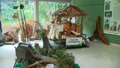 Bosque da Ciência é opção de lazer e contato com natureza nas férias em Manaus - Local é destaque por colocar visitante em contato com a Amazônia
