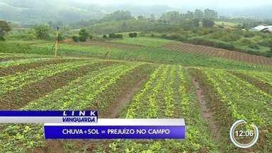 Produtores de hortaliças tem prejuízos com chuvas - Profissionais de São José tiveram prejuízo.