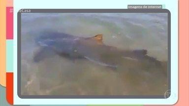 Banhistas filmam tubarões e arraias na beira de uma praia no Rio de Janeiro - O biológo Vinícius Ferreira explica o fenômeno