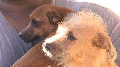Serviço de castração é oferecido de graça em Belo Horizonte - Pequena cirurgia é um dos métodos mais indicados para o controle populacional de cães e gatos.