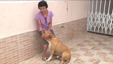 Começa o censo animal nos bairros de Curitiba - A pesquisa começou pelo bairro Cajuru, mas até o fim do ano vai se estender para nove mil pessoas de toda a cidade