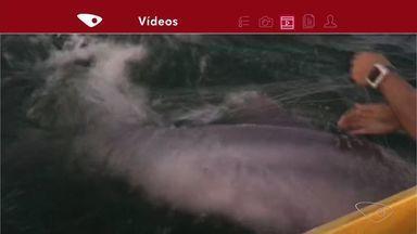 Golfinho fica preso em rede e é solto por canoísta em Vitória; vídeo - Grupo praticava canoa havaiana quando percebeu algo estranho no mar.Pesca predatória pode ter sido causa da morte de boto-cinza, na terça (17).