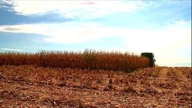 Veja os assuntos do campo desta semana - Na região centro-oeste de Minas Gerais, duzentos produtores rurais caíram no golpe de uma quadrilha que vendia produtos falsificados. No Distrito Federal pesquisadores da Embrapa capacitam técnicos da Emater sobre a melhor forma de usar a irrigação em diferentes culturas.