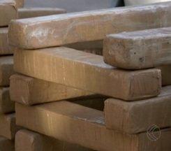 Cão da PM acha mais de 300 Kg de droga em Divinópolis; veja vídeo - Maconha estava enterrada em mata e foi encontrada com a ajuda de Thor. Apreensão deste tipo de entorpecente é uma das maiores na região.